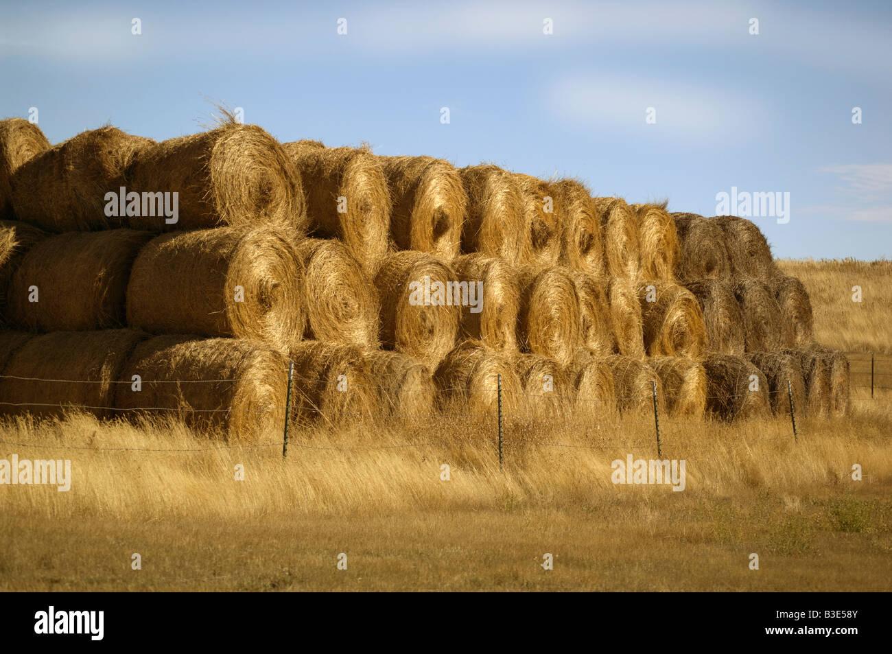 Fardos de trigo en un campo de Dakota del Norte Imagen De Stock
