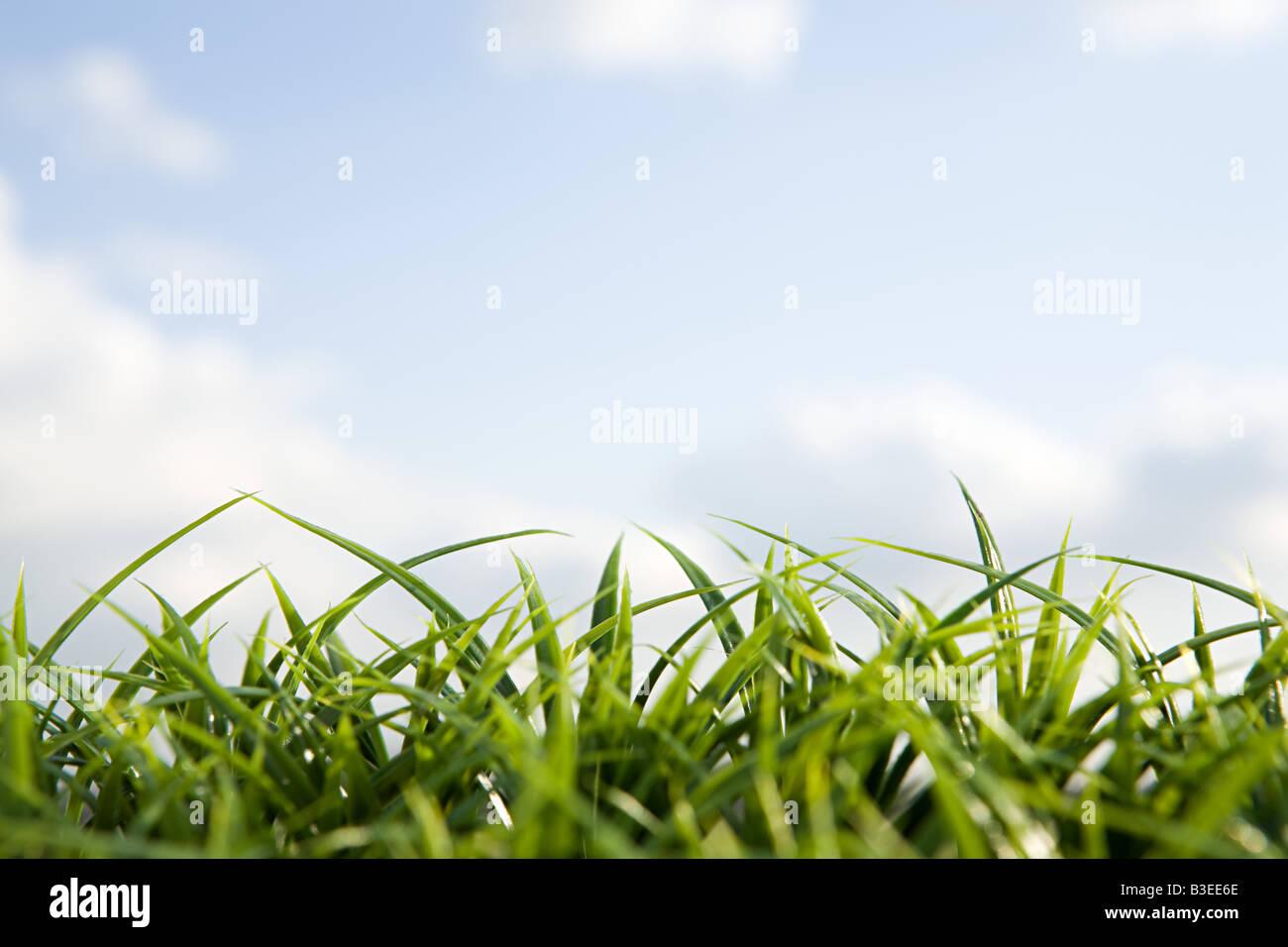 Cerca de la hierba y el cielo Imagen De Stock