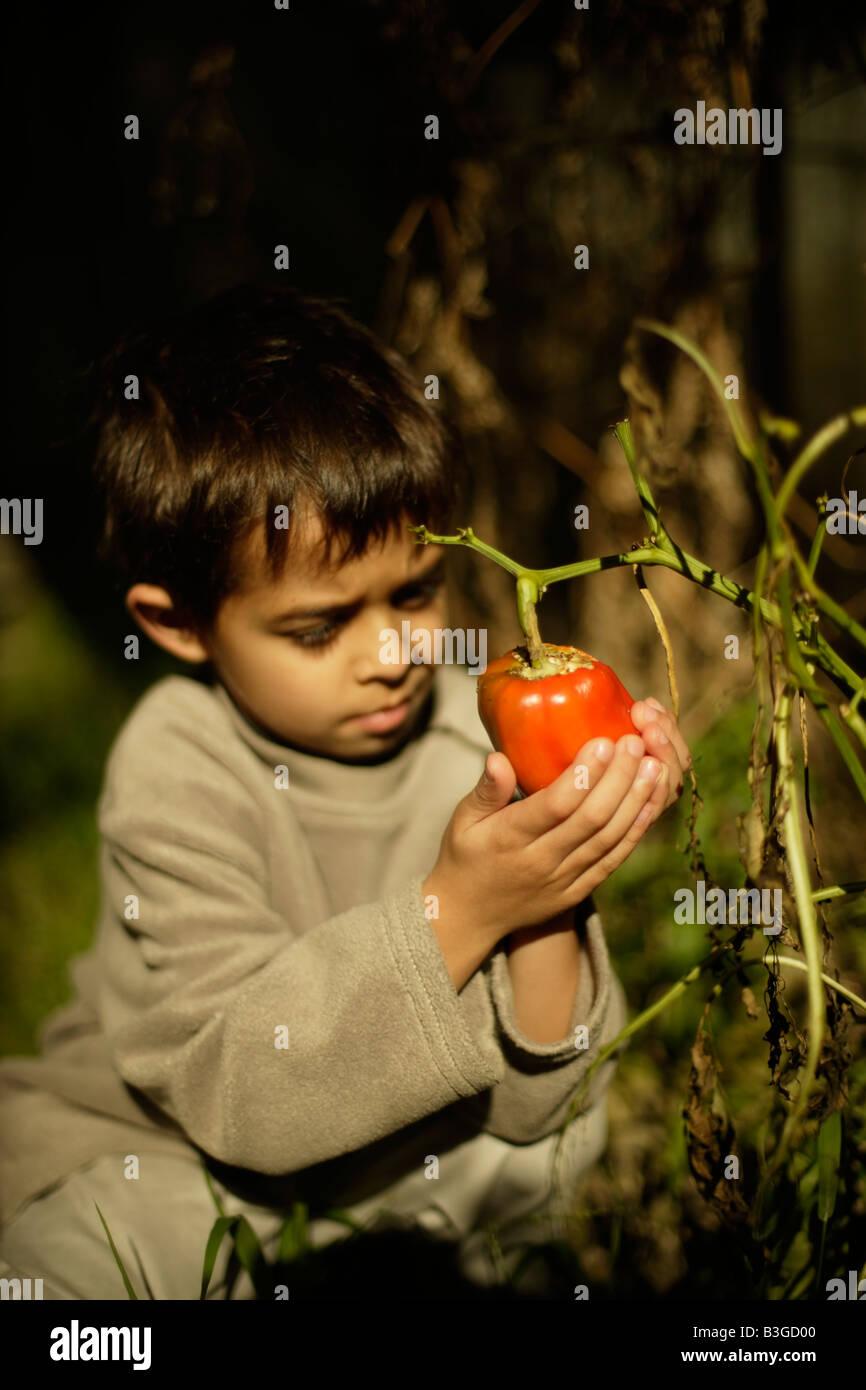 Muchacho de seis años tiene cultivadas orgánicamente pimiento rojo en un huerto descuidado deja despojados por orugas Foto de stock