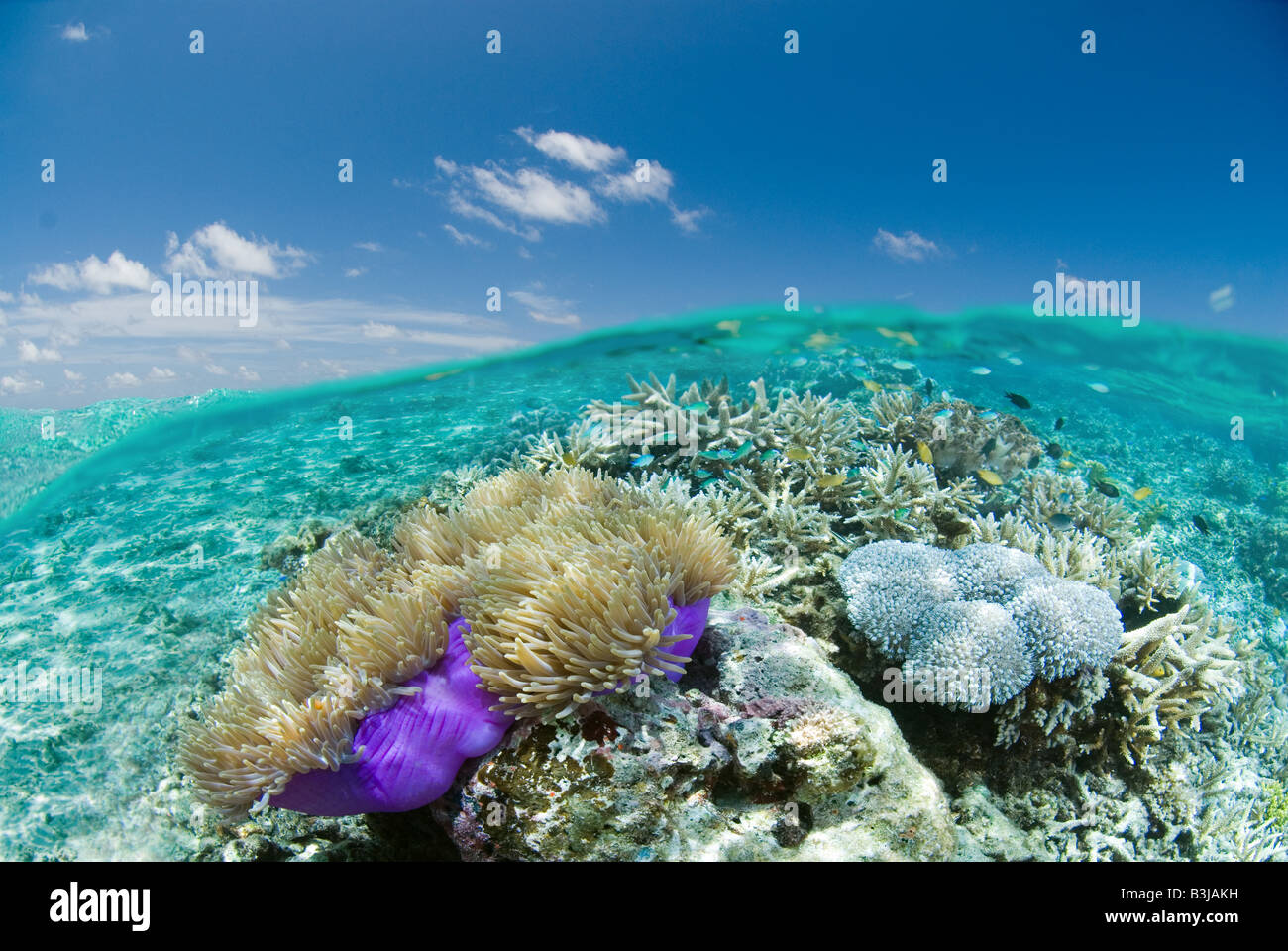 Over/under shot superficial de coloridos arrecifes de coral. Foto de stock