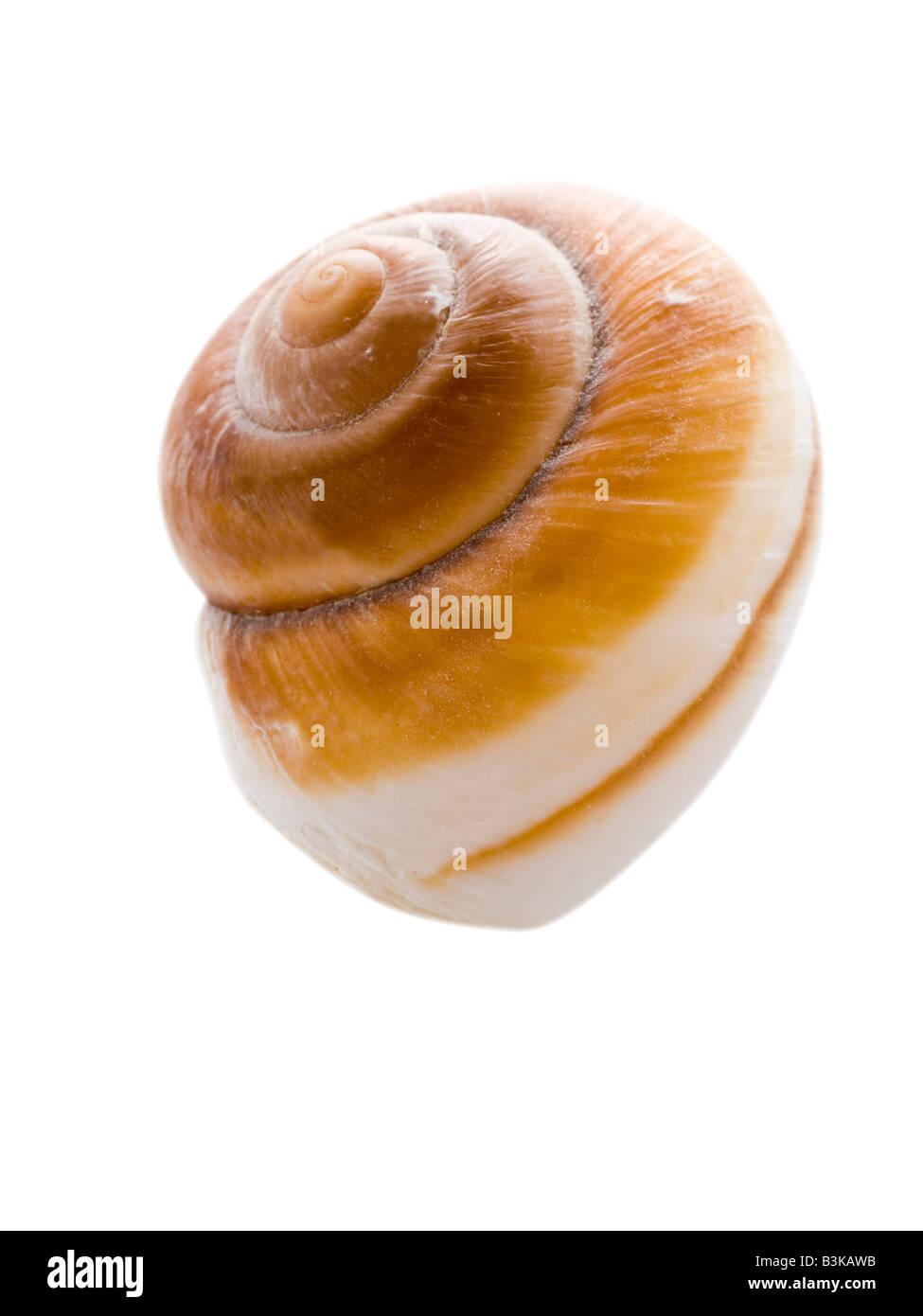 Concha de mar Imagen De Stock