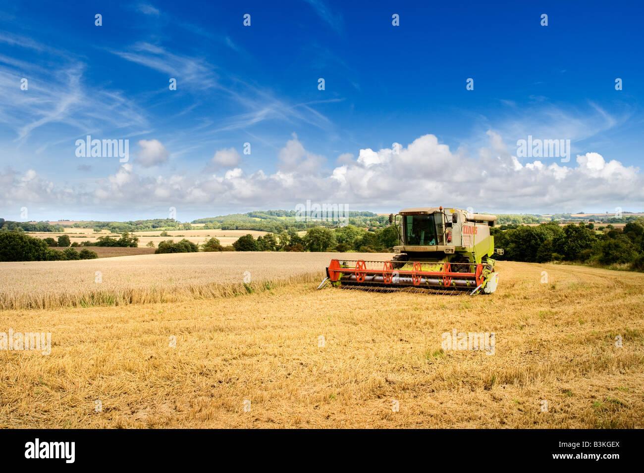 Campo de trigo a finales del verano con la cosechadora, la agricultura en el Lincolnshire Wolds, REINO UNIDO Imagen De Stock