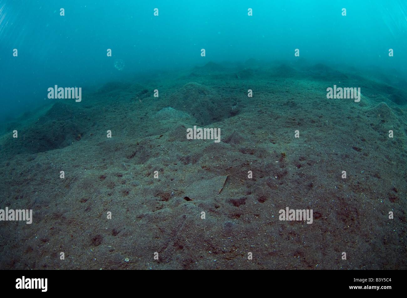 El paisaje submarino en el estrecho de Lembeh consta principalmente de arena volcánica negra Imagen De Stock