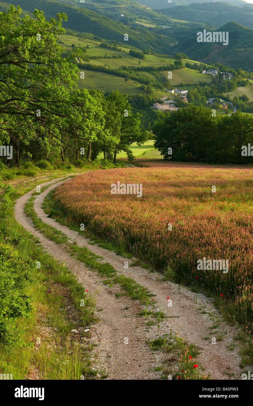 Una pista agrícola a través de campos de flores de primavera en la Valnerina cerca de Preci, Umbría. Imagen De Stock
