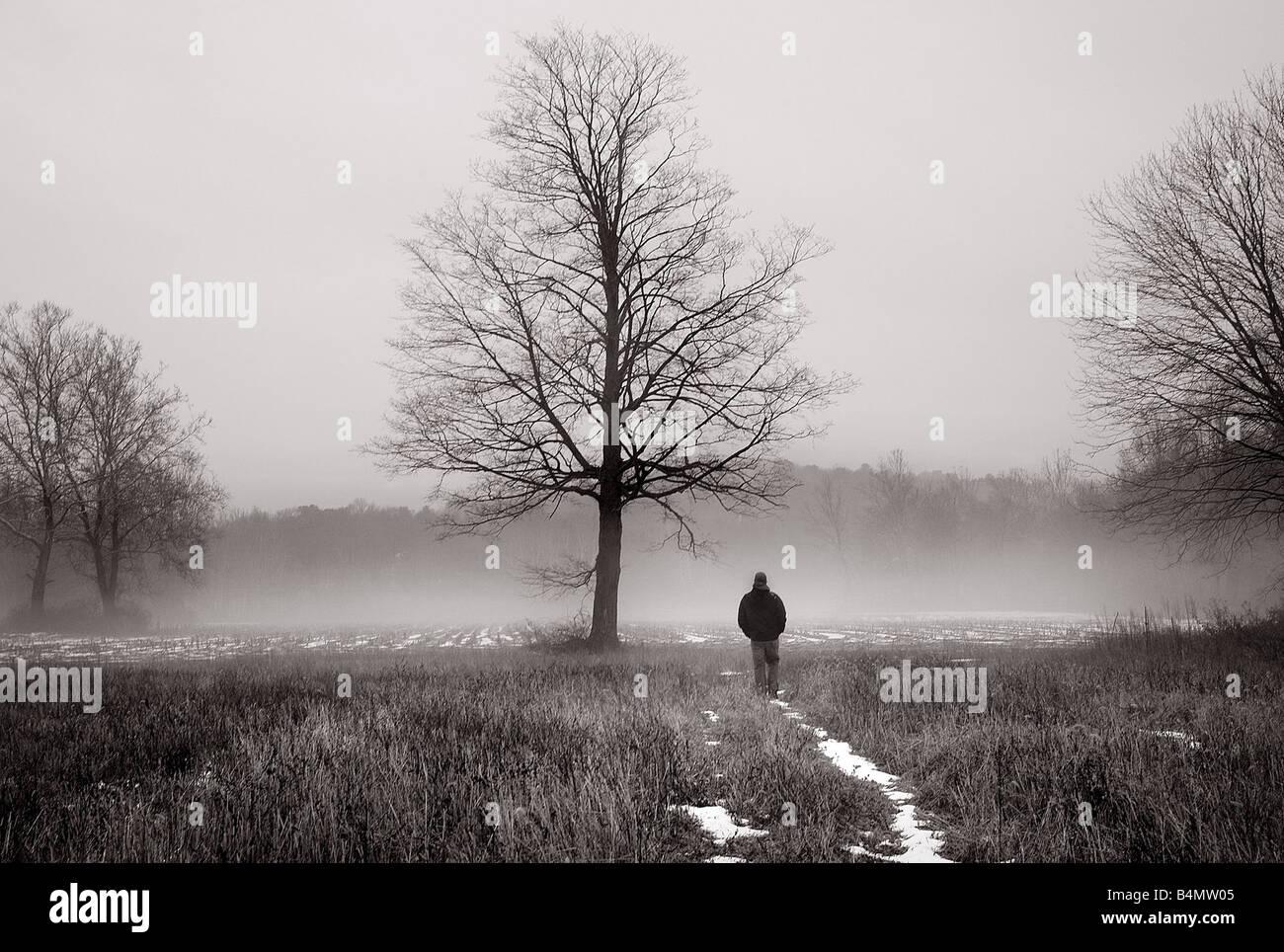 Imágenes de ensueño de un misterioso hombre caminando en la niebla cerca de un árbol grande Foto de stock
