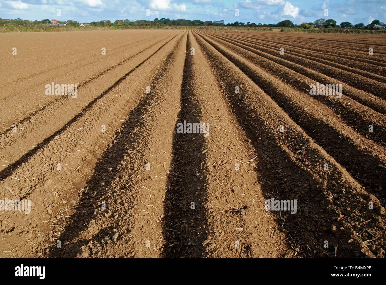Los surcos del campo cerca de Ormskirk en Lancashire, Inglaterra, Reino Unido Imagen De Stock