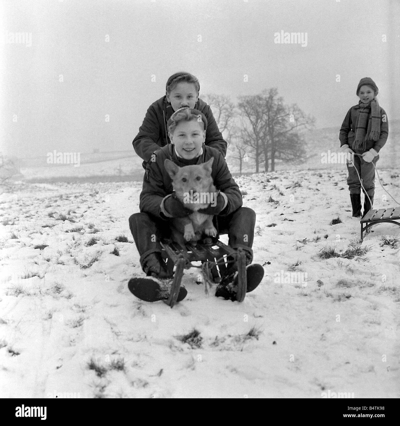 El clima frío de nieve gemelos Frank y Kenneth Wilkinson de Stockport trajo su mascota corgie Scamp el perro junto al parque de Cal Cheshire para disfrutar del trineo Foto de stock