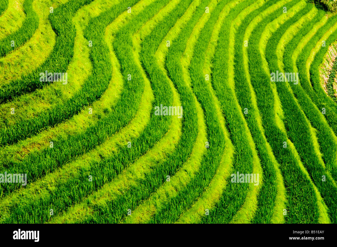 Las increíbles terrazas de arroz en Long Ji, Guangxi Foto de stock