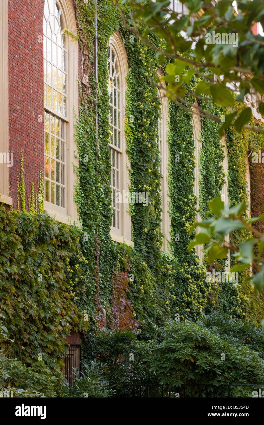 Ivy en paredes de ladrillo de la Universidad de Harvard Cambridge, Massachusetts Imagen De Stock