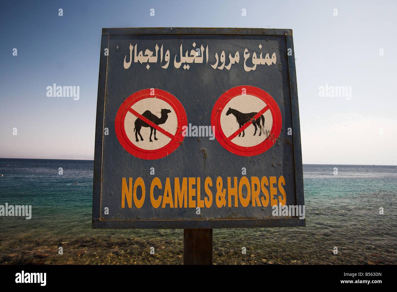 No hay camellos y caballos firmar en Masbat paseo en Asilah, Dahab por el Golfo de Aqaba, al sur de la península Imagen De Stock