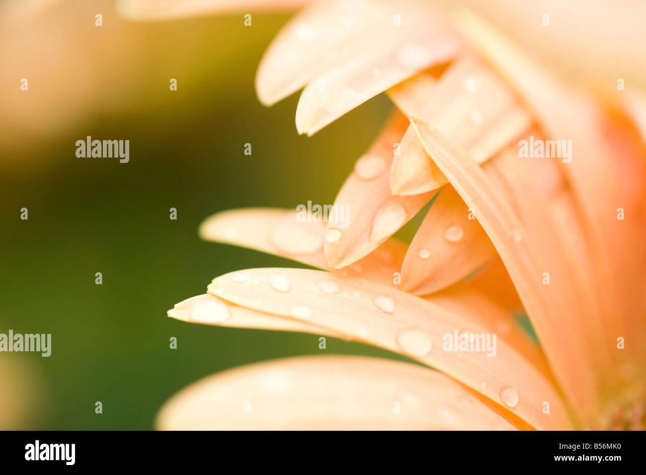 Cerca de una flor Foto de stock