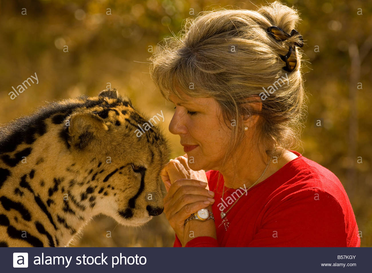 Roode lente con un guepardo llamado Sam en el centro de Especies Amenazadas Hoedspruit cerca del Parque Nacional Imagen De Stock