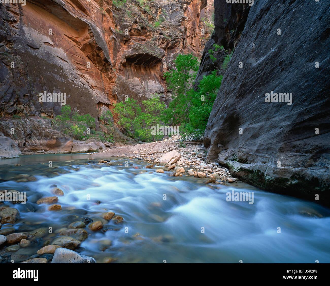 Virgen río que fluye a través de la Virgen se estrecha, el Parque Nacional de Zion, Utah, Estados Unidos de América, América del Norte Foto de stock