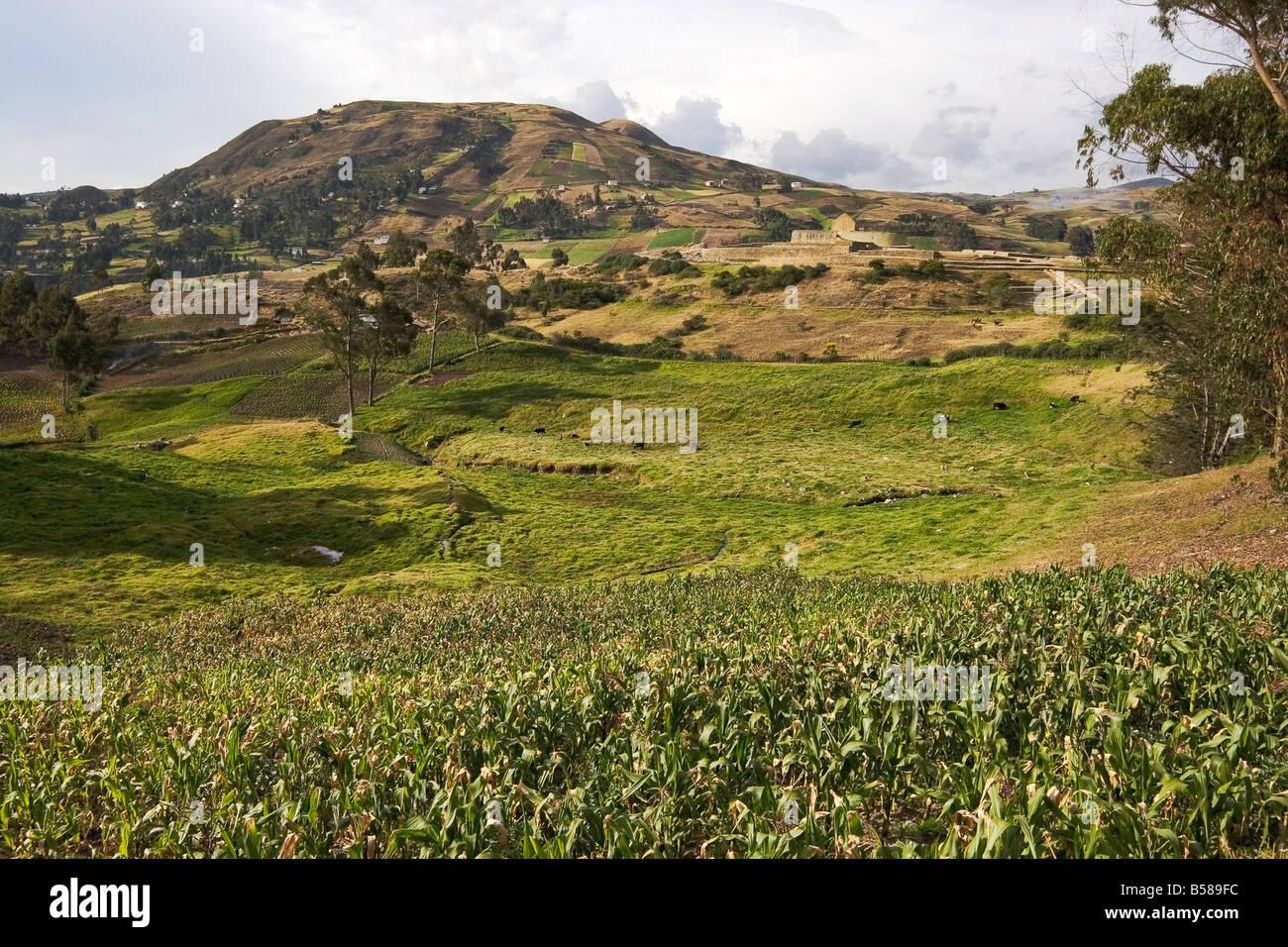 Mirando a través de los campos de maíz del pueblo canario hacia el Templo del Sol, Ingapirca, provincia Imagen De Stock