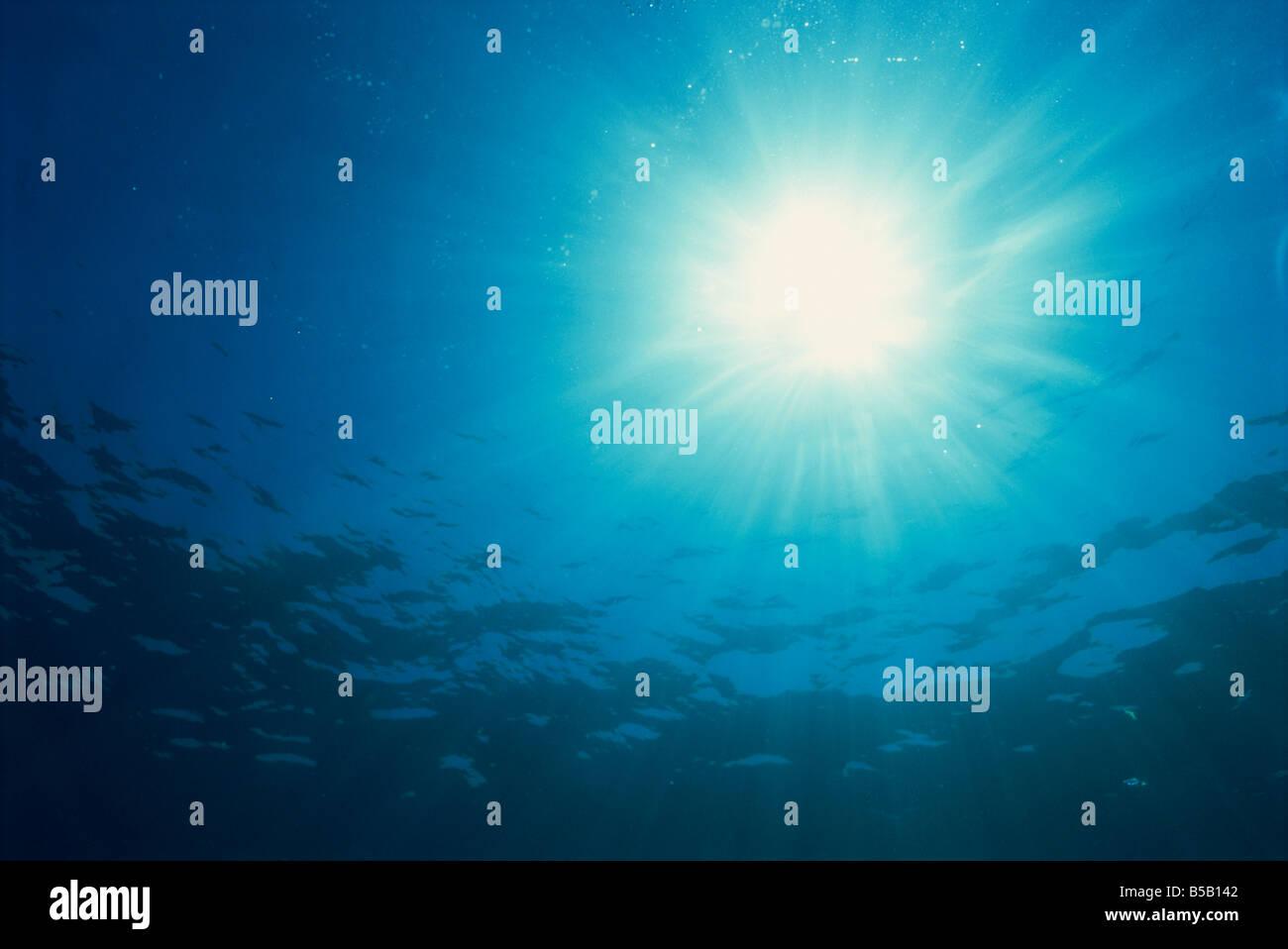 Rayos de sol a través de la superficie de submarina en Isla Similan Tailandia L Murray Imagen De Stock