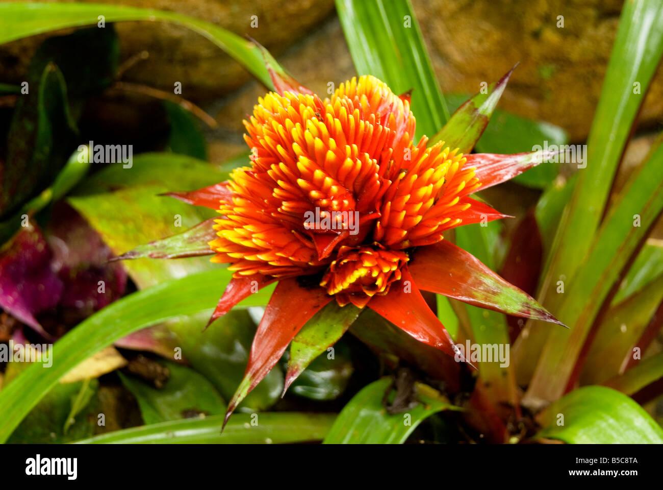 Una Exotica Flor Roja Es Capturada En El Tiempo Las Flores Y Las