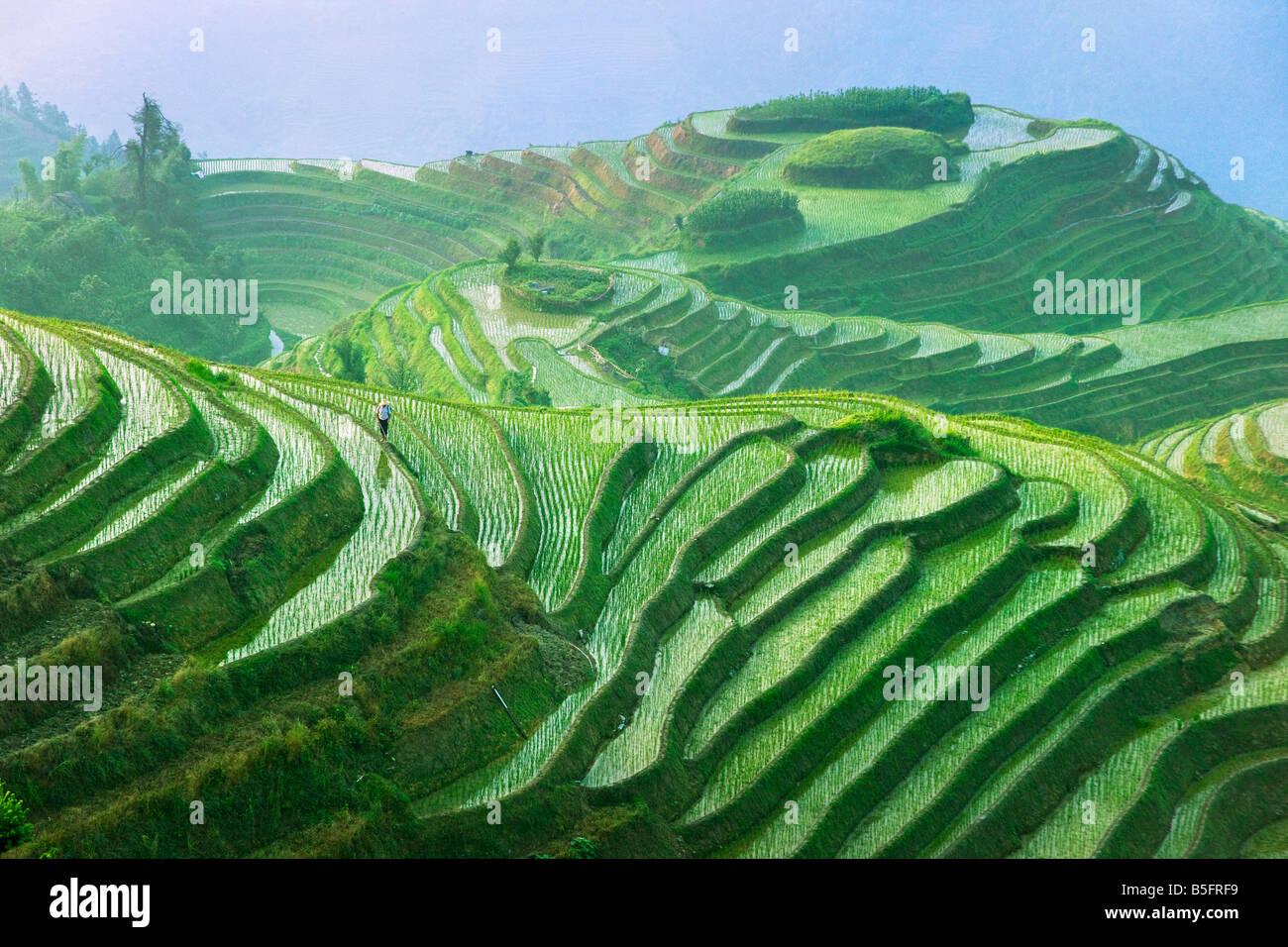 Paisaje de terrazas de arroz de Longsheng China de Guangxi Foto de stock