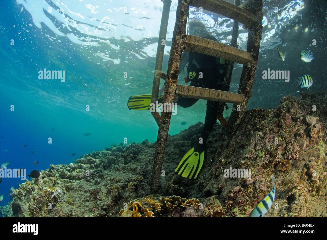 Scuba Diver y escalera submarinas, Mar Rojo. Imagen De Stock