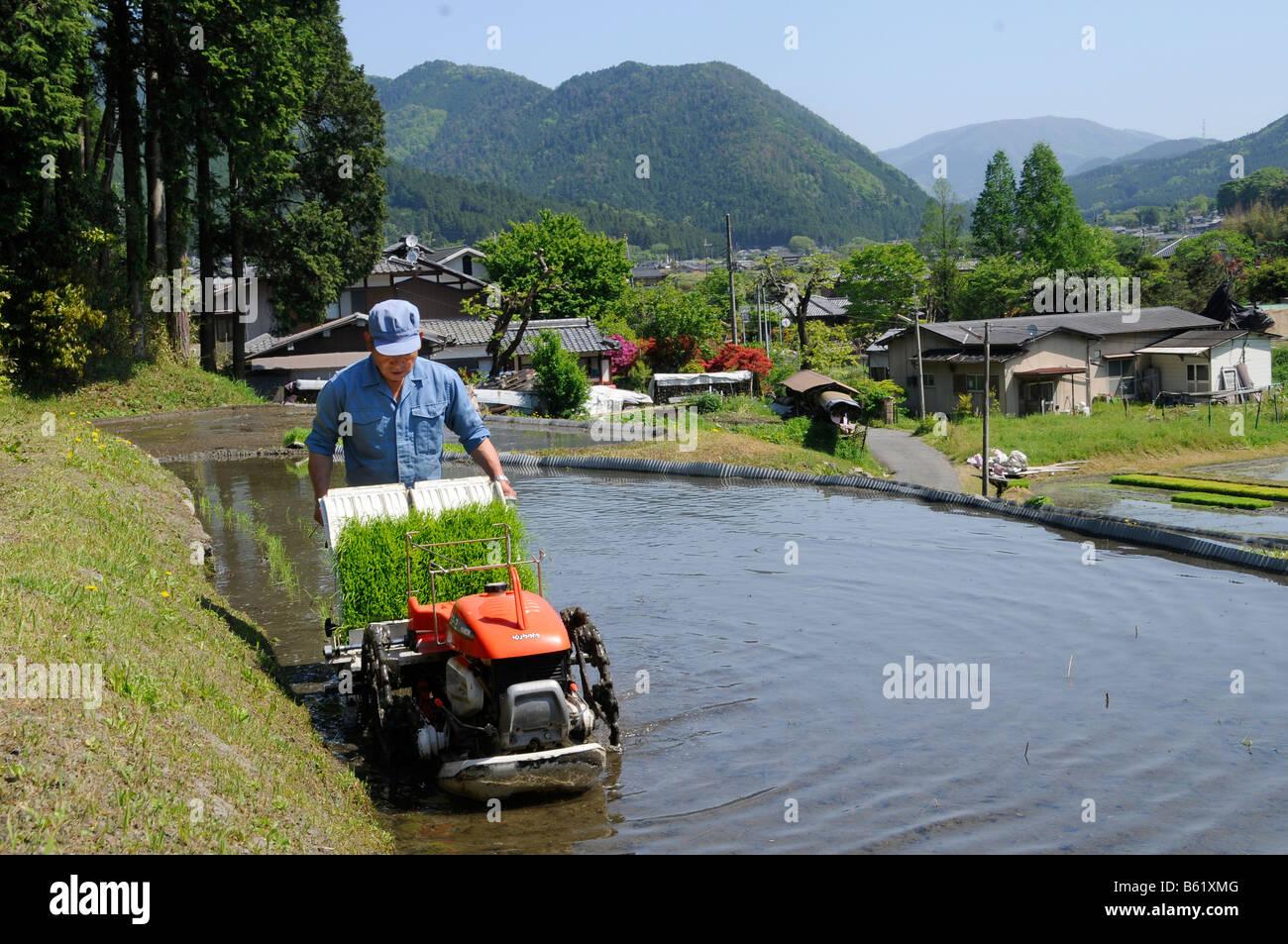 Cultivador de arroz japonés con una plantación de arroz de la máquina en una terraza de arroz inundado en Ohara, Foto de stock