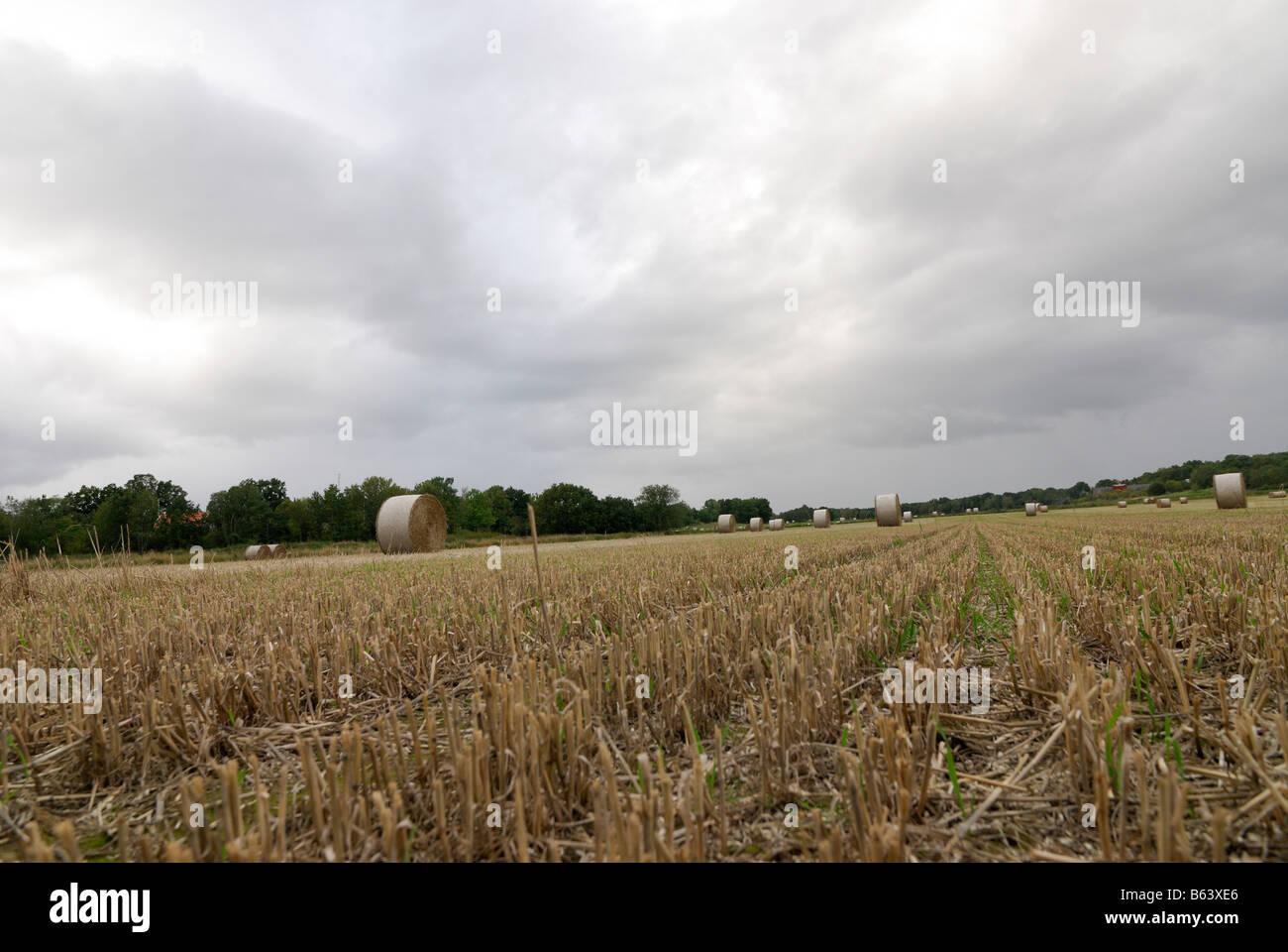 Un campo después de la cosecha de otoño de Suecia Foto de stock
