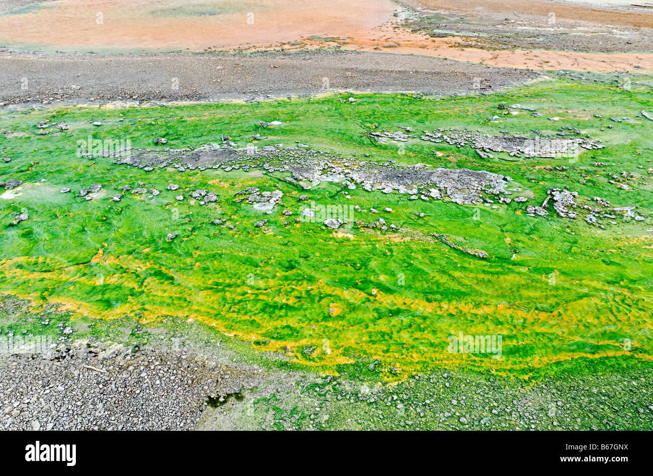 Primer plano del escurrimiento de aguas termales con coloridas algas y bacterias. Foto de stock