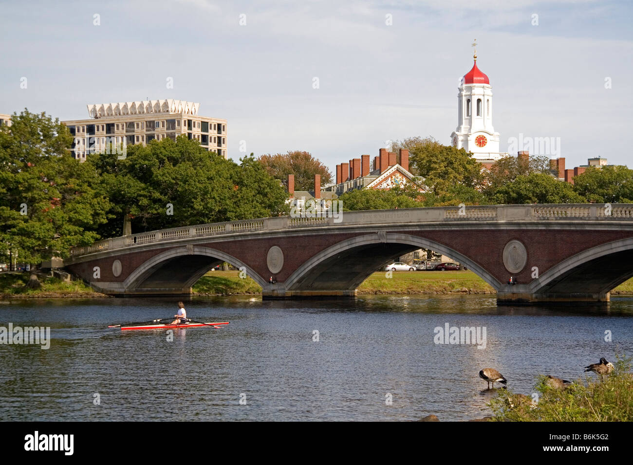 Remo en el río Charles y los edificios de la Universidad de Harvard en Cambridge Greater Boston Massachusetts Imagen De Stock