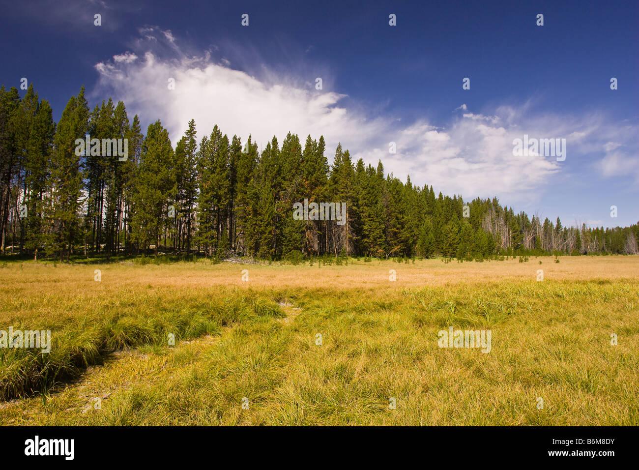 El Parque Nacional Yellowstone, Wyoming USA - prado en el área del lago Riddle Foto de stock
