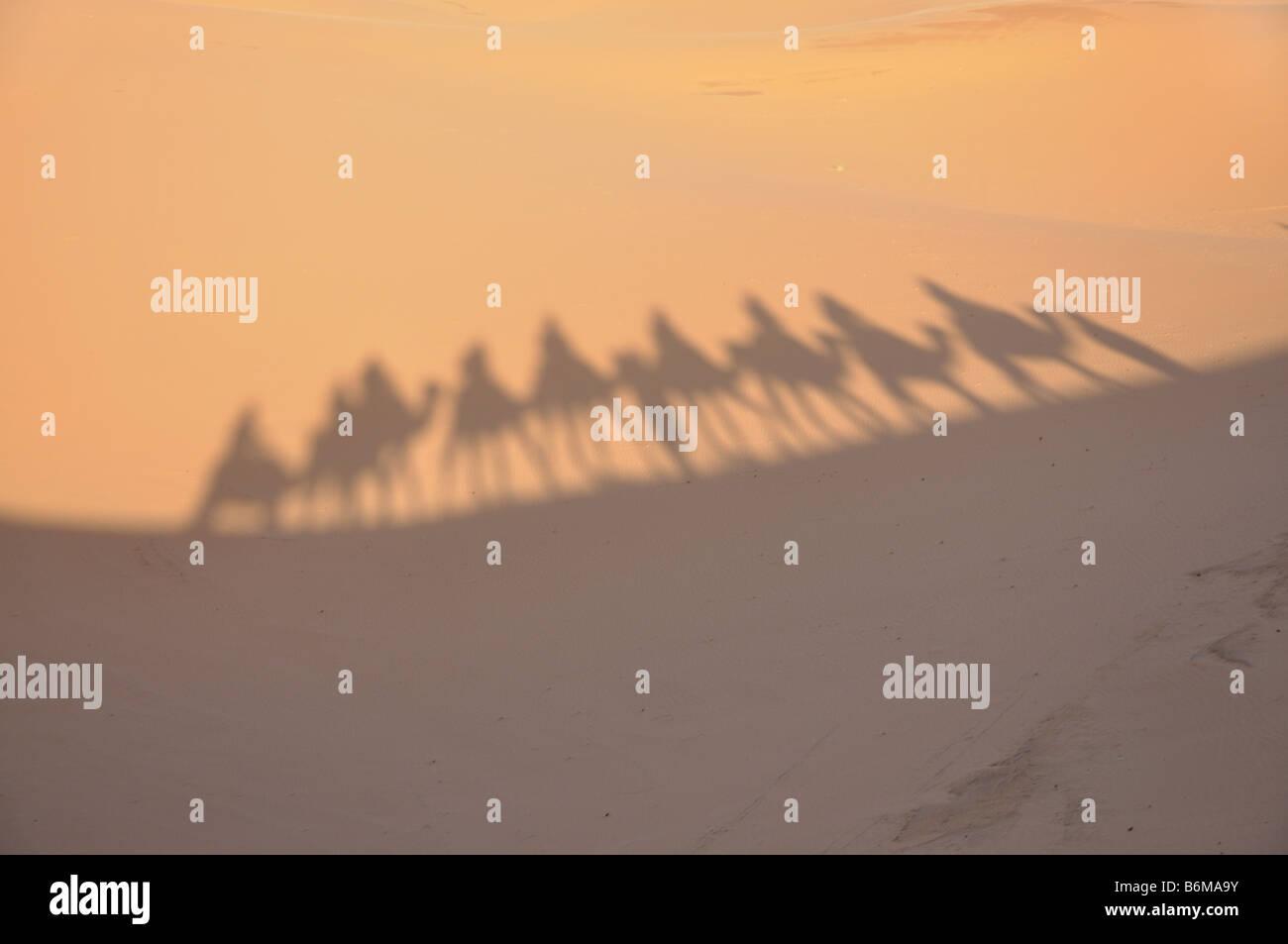 Sombras de camellos en el desierto del Sahara Merzouga, Marruecos Foto de stock