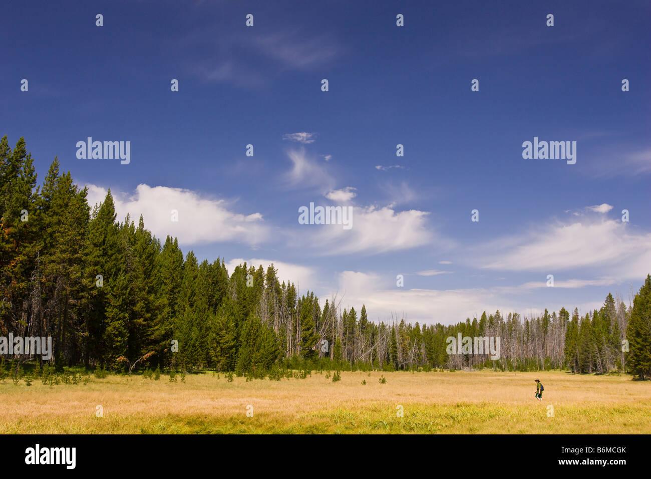 El Parque Nacional Yellowstone, Wyoming, EE.UU. - Boy caminatas a través de pradera Riddle zona lacustre. Señor Foto de stock