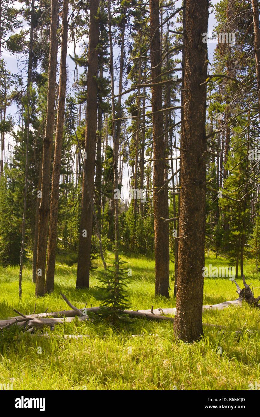 El Parque Nacional Yellowstone, Wyoming USA Riddle zona lacustre Foto de stock