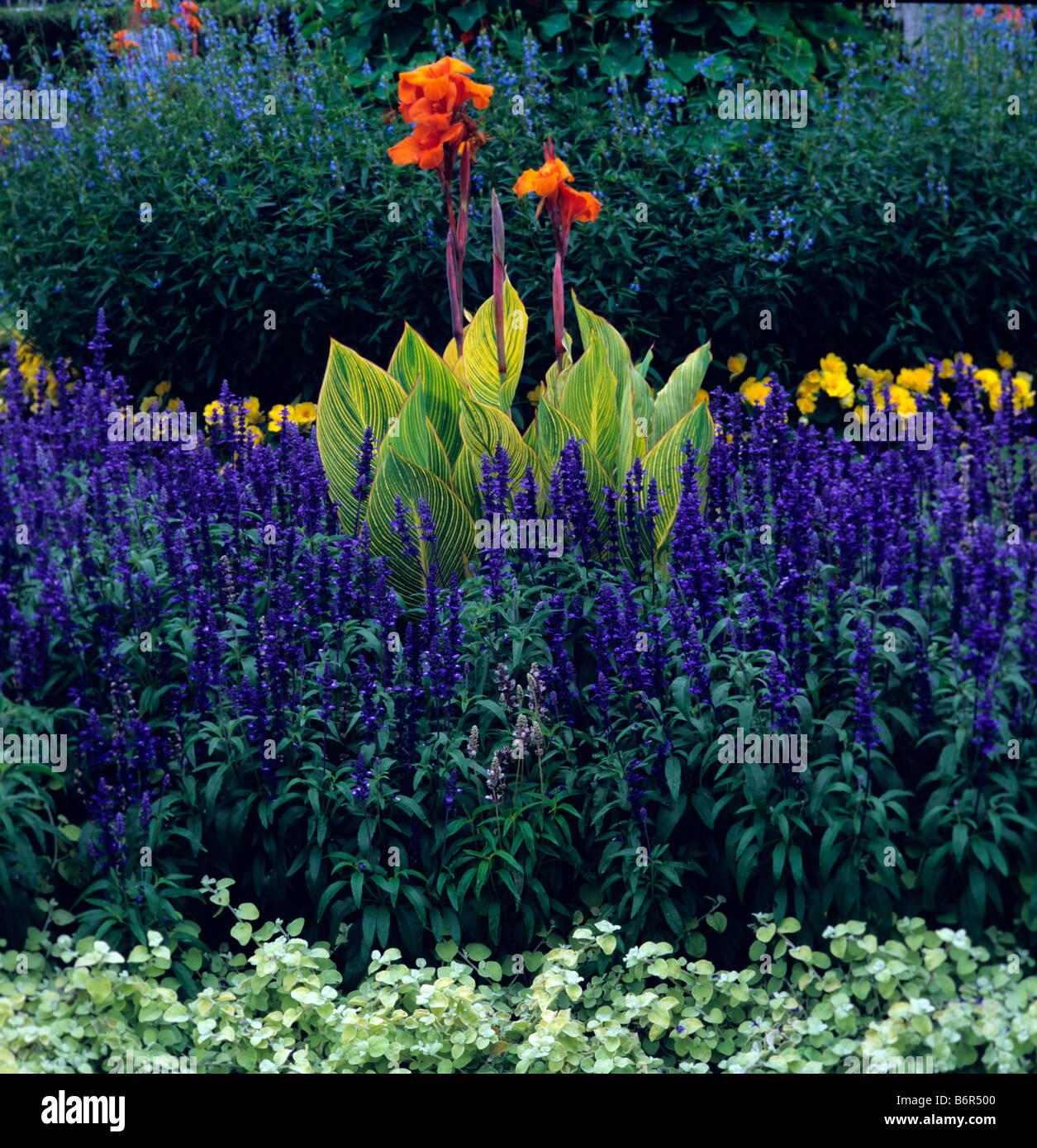 Canna Striata en borde azul en Kew Foto de stock