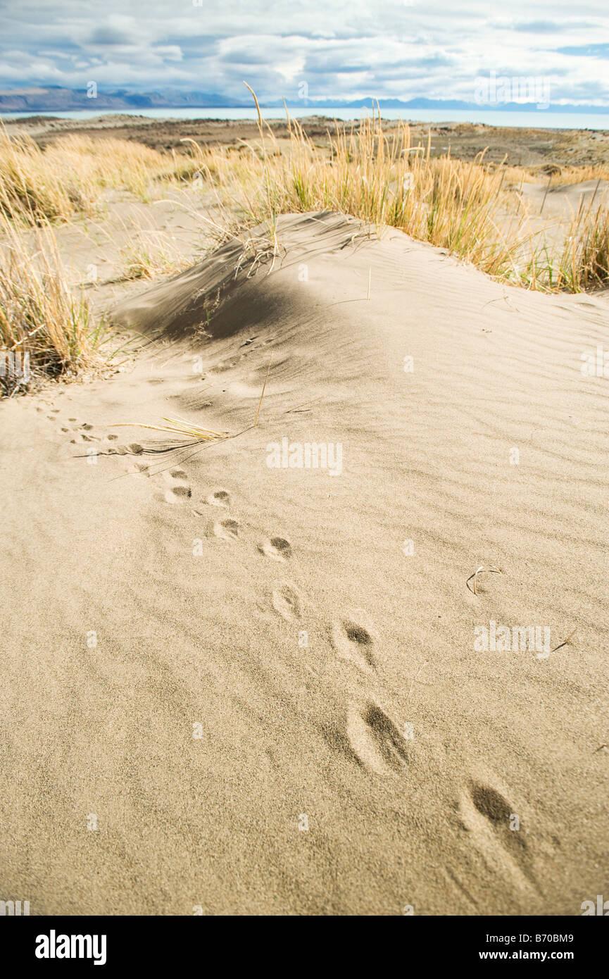 Las vías a través de la arena con el Lago Argentino en la distancia, el Calafate, Argentina. Imagen De Stock