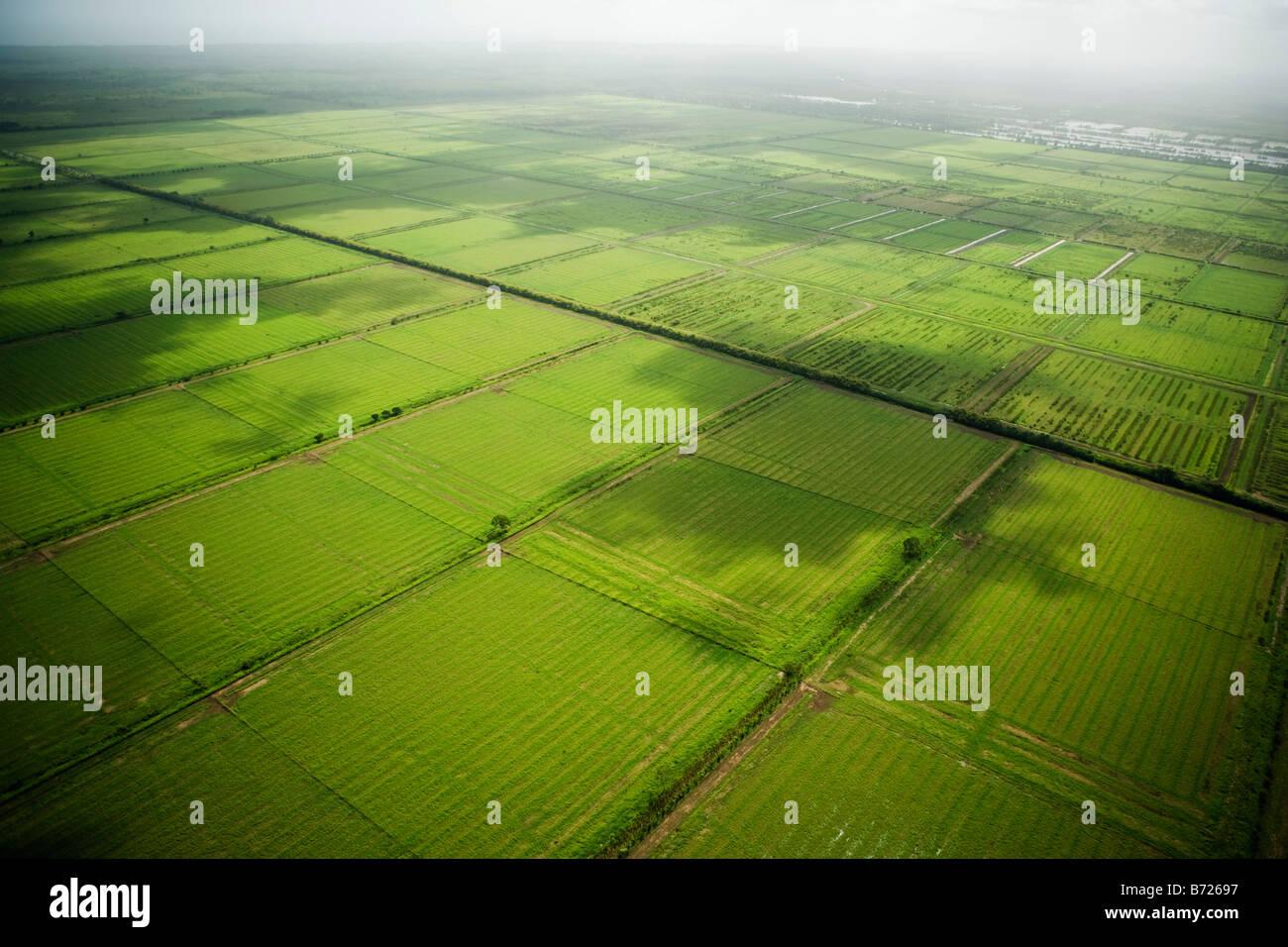 Surinam, Paramaribo, Antena de antiguas plantaciones. Ahora subdesarrollados. Imagen De Stock