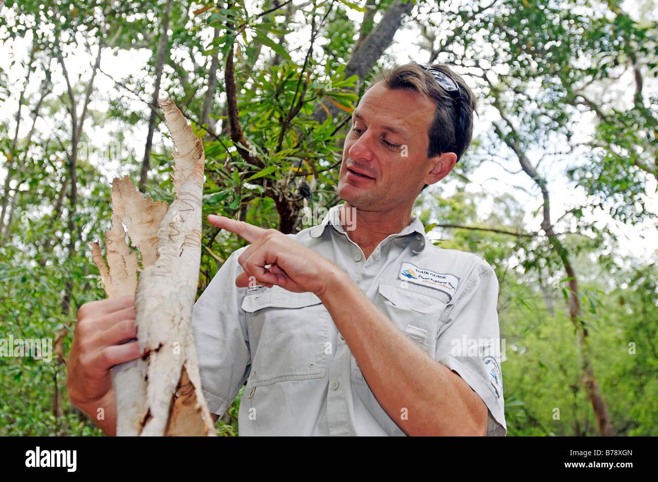 Ranger explicando detalles sobre el Scribbly gum (Eucalyptus haemastoma), la isla de Fraser, Queensland, Australia Imagen De Stock