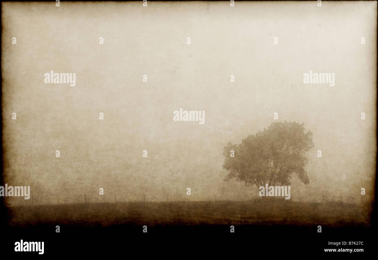 Un solo árbol solitario en una mañana neblinosa Imagen De Stock