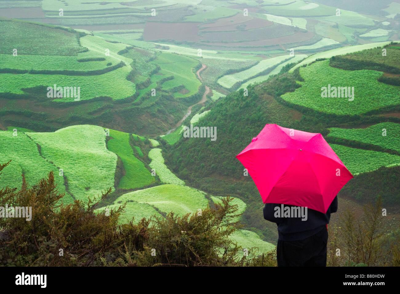 Turista con sombrilla roja ver terrazas del trigo y la arcilla roja en la montaña en la niebla de la mañana Imagen De Stock