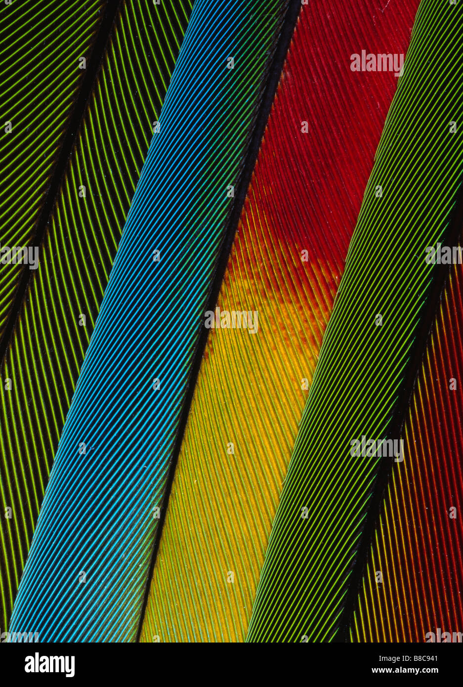 PLUMAS DE LORO Imagen De Stock