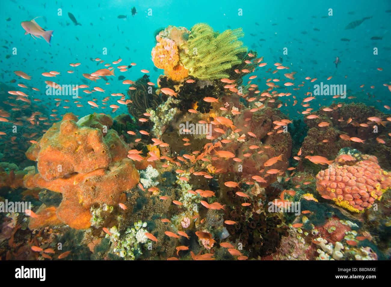 Vida marina de isla verde Imagen De Stock