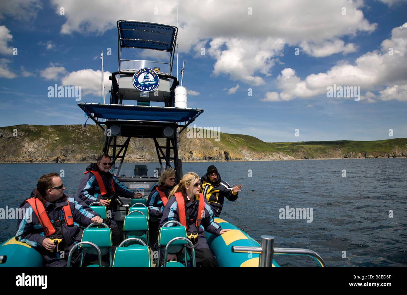 Viaje con orca mar safaris cornwall Imagen De Stock
