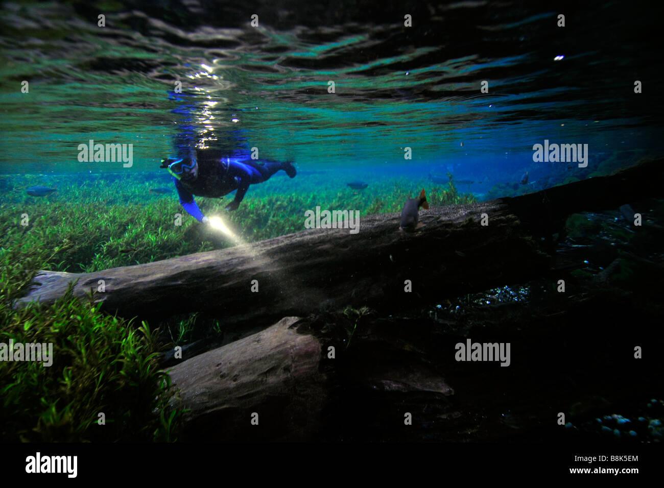 Libre buceador explora el paisaje submarino flotando río Natural Aquario Baia Bonita Bonito, Mato Grosso do Imagen De Stock