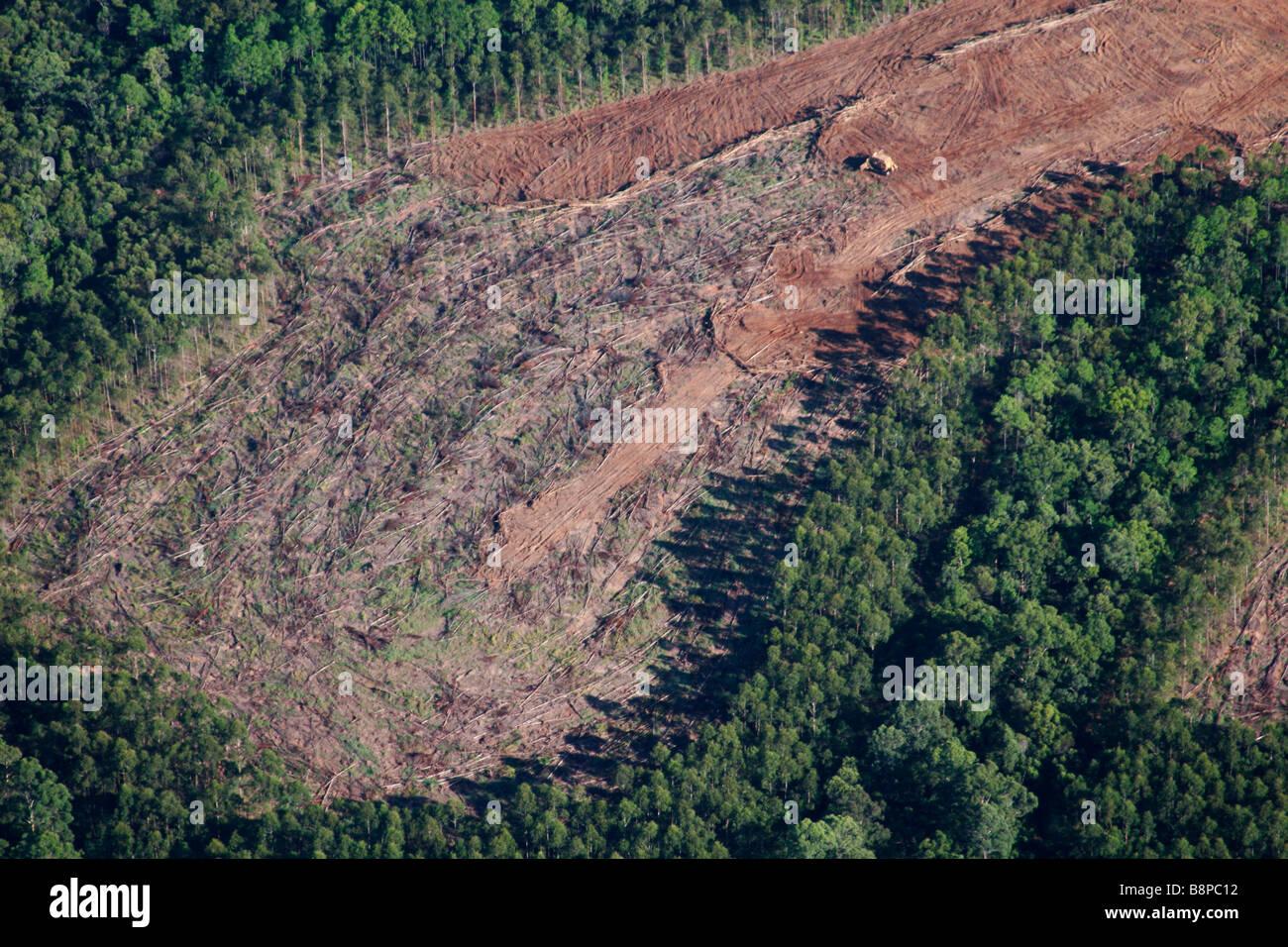 deforestación Imagen De Stock