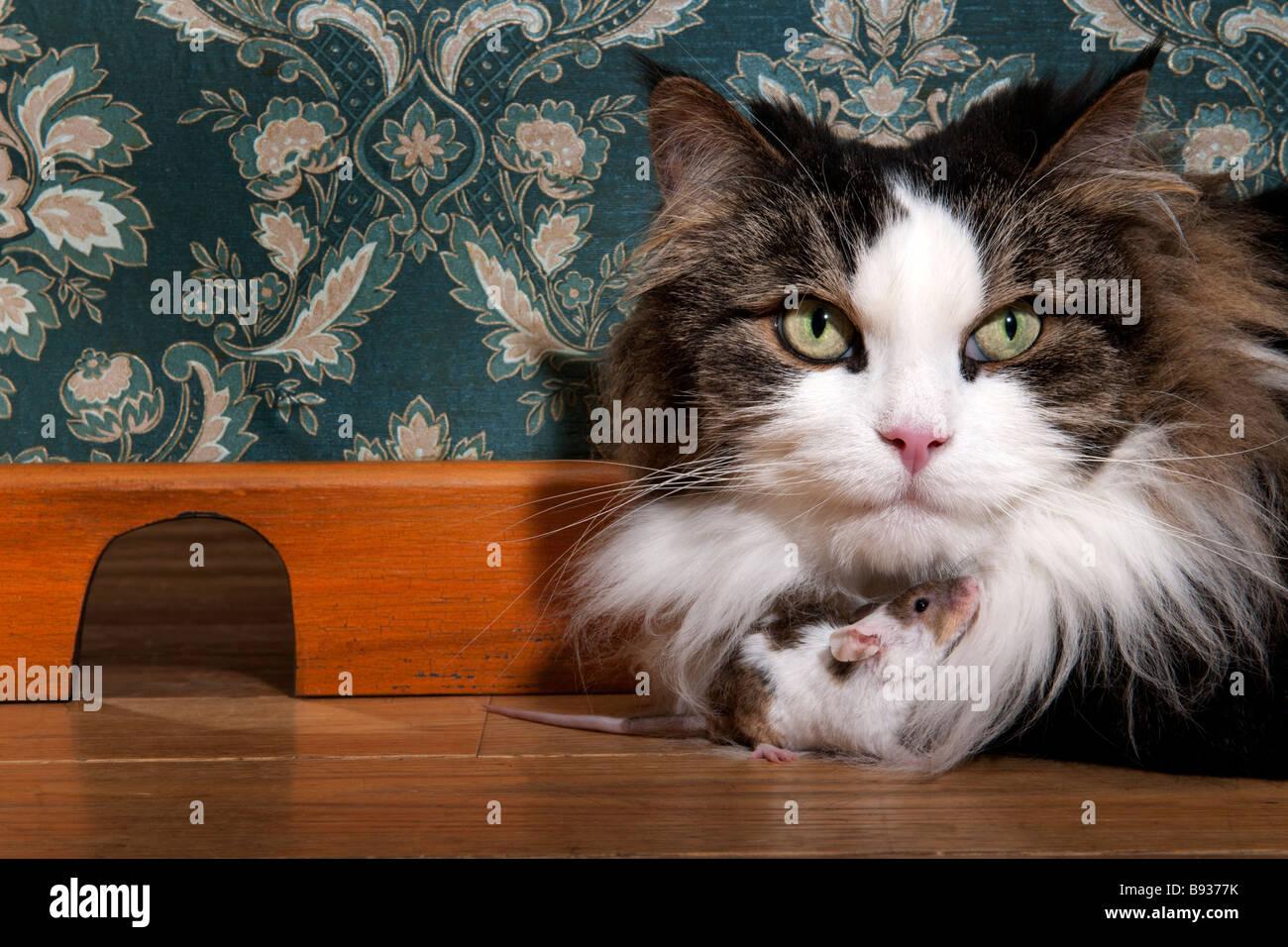 El gato y el ratón en una lujosa habitación antigua Foto de stock