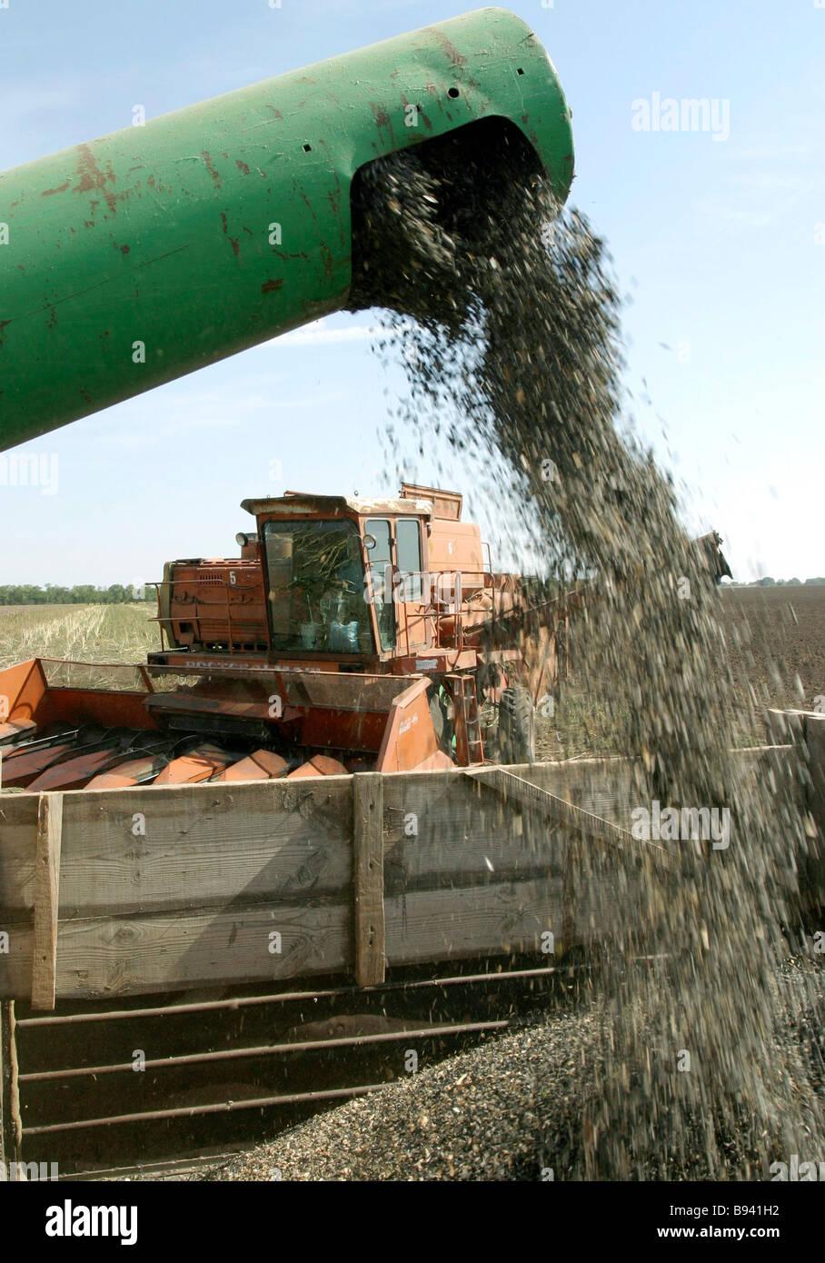 Está a punto de concluir la recolección de girasol en la región de Rostov del distrito de Azov Foto de stock