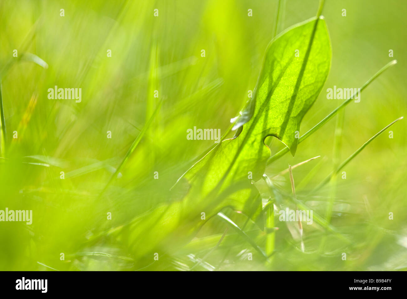 Cerca de campo Dept de pasto de verano Imagen De Stock