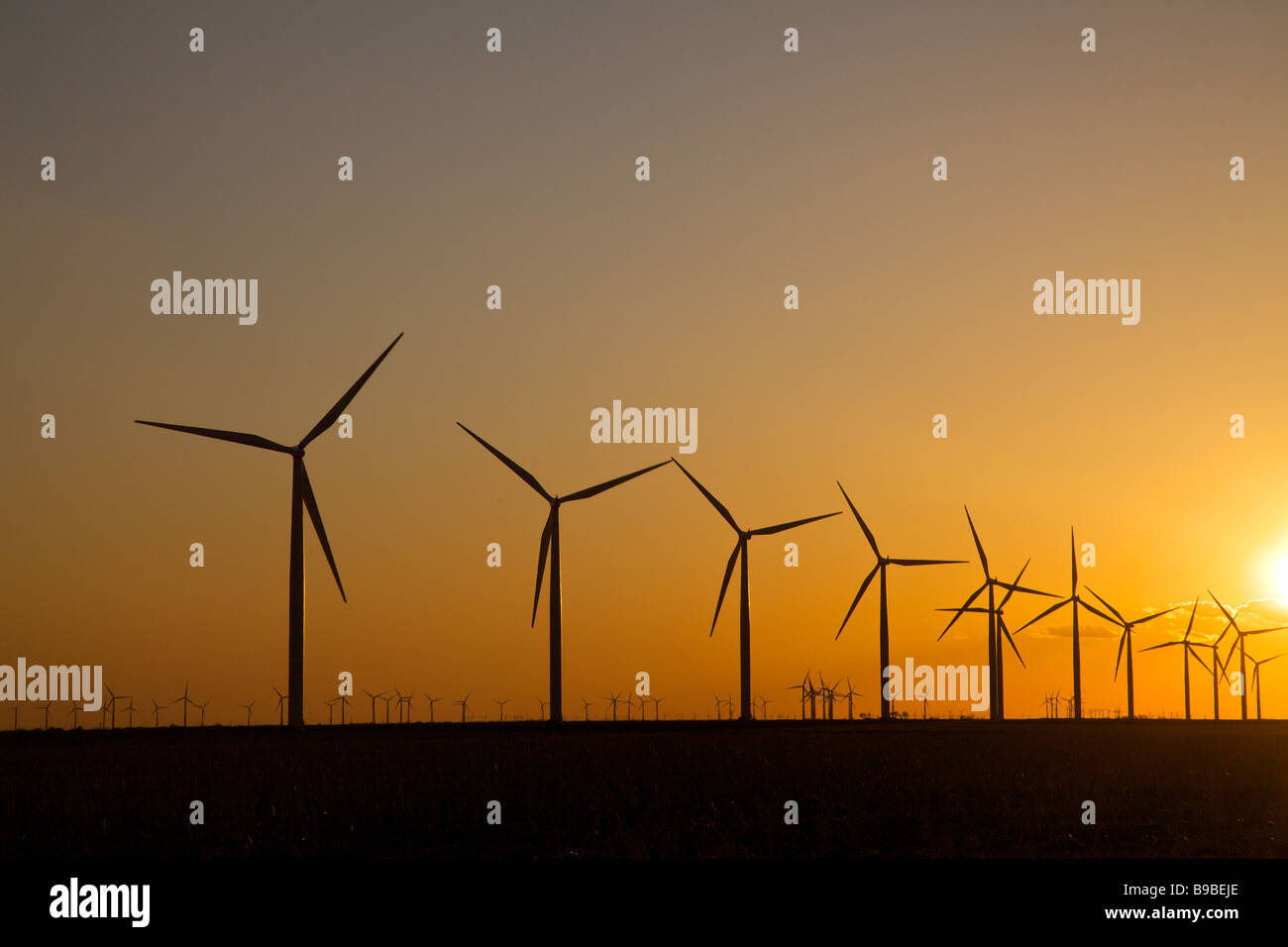 Las turbinas eólicas generadoras de electricidad en Horse Hollow Wind Farm Nolan en Sunset de Texas. Imagen De Stock