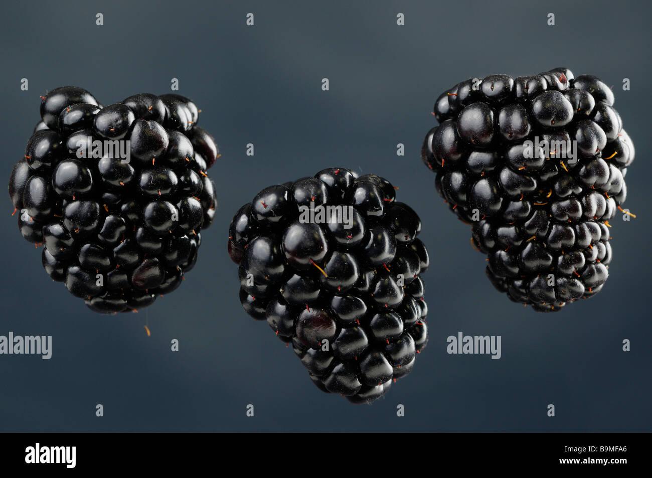 Tres suspendidos zarzamoras Rubus fruticosus frutas agregadas sobre un fondo azul. Imagen De Stock