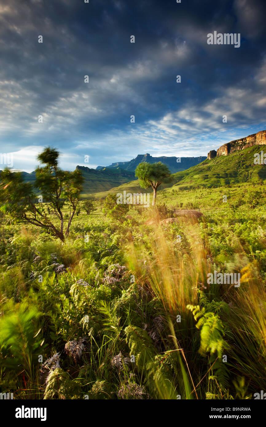 El Anfiteatro, el Parque Nacional Royal Natal, montañas Drakensberg, KwaZulu Natal, Sudáfrica Imagen De Stock