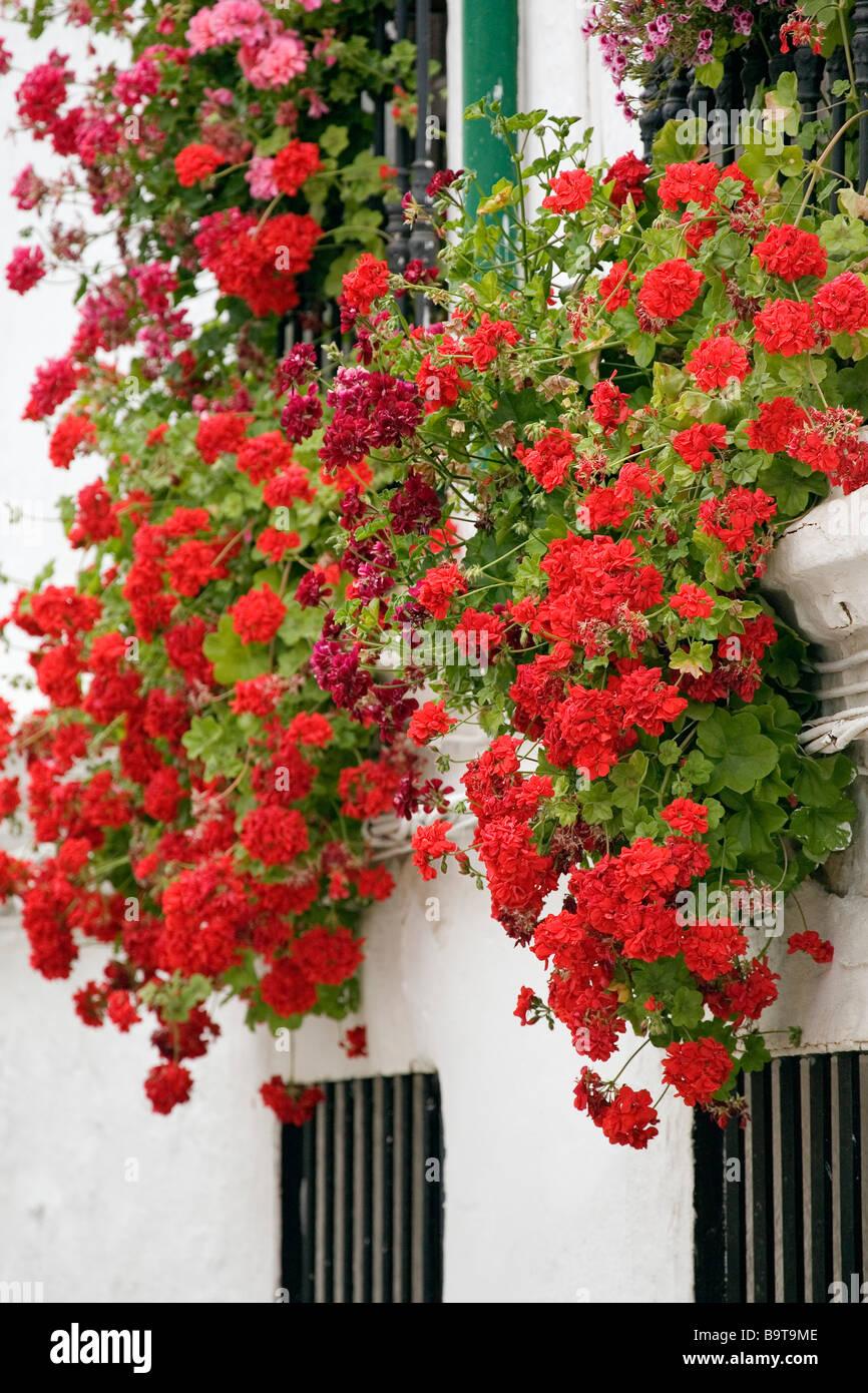 Rejas Y Balcones Con Flores Cordoba Andalucia Espana Tipicos - Fotos-de-balcones-con-flores