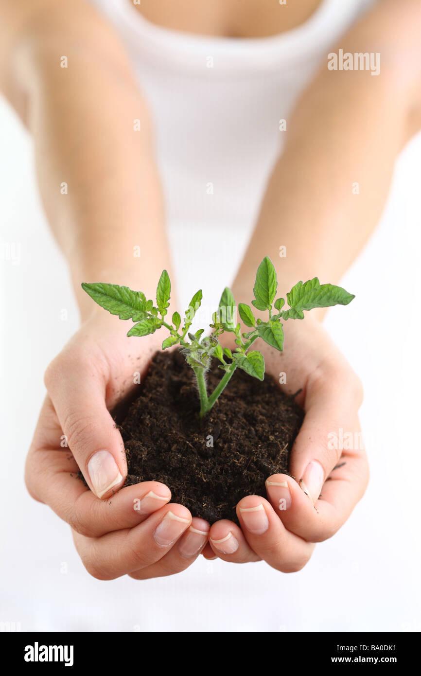 Manos sosteniendo el suelo y la planta Imagen De Stock