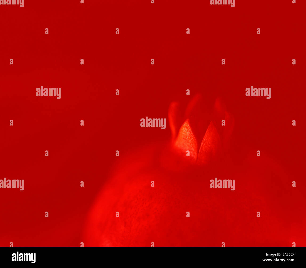 Rojo de la guayaba Imagen De Stock